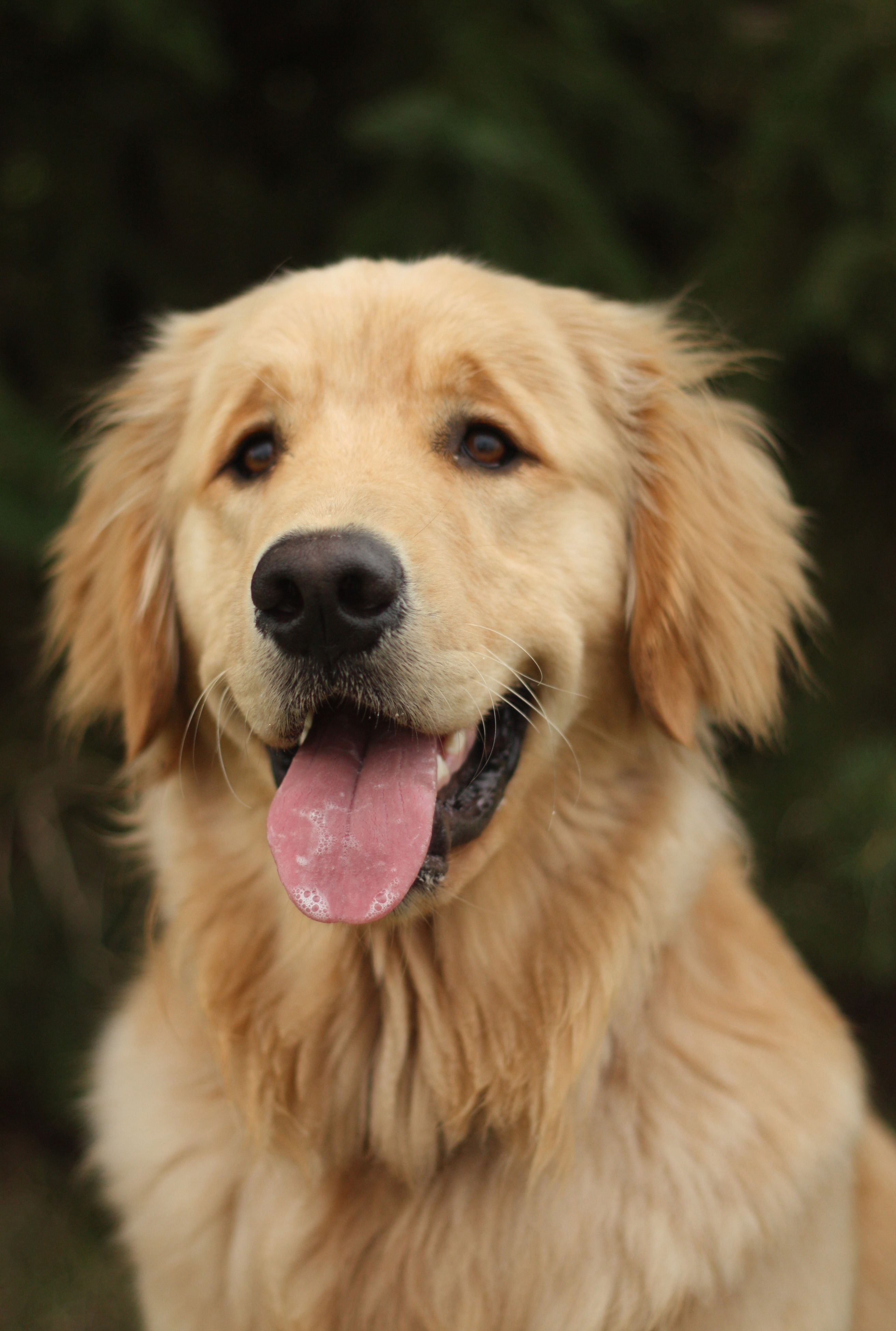 If I Had A Huge House And A Huge Yard I Would Have Tons Of Dogs