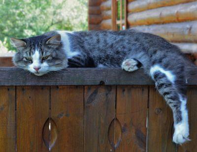 cybergata: Дремлет кот на брусе… Автор Akvaleria