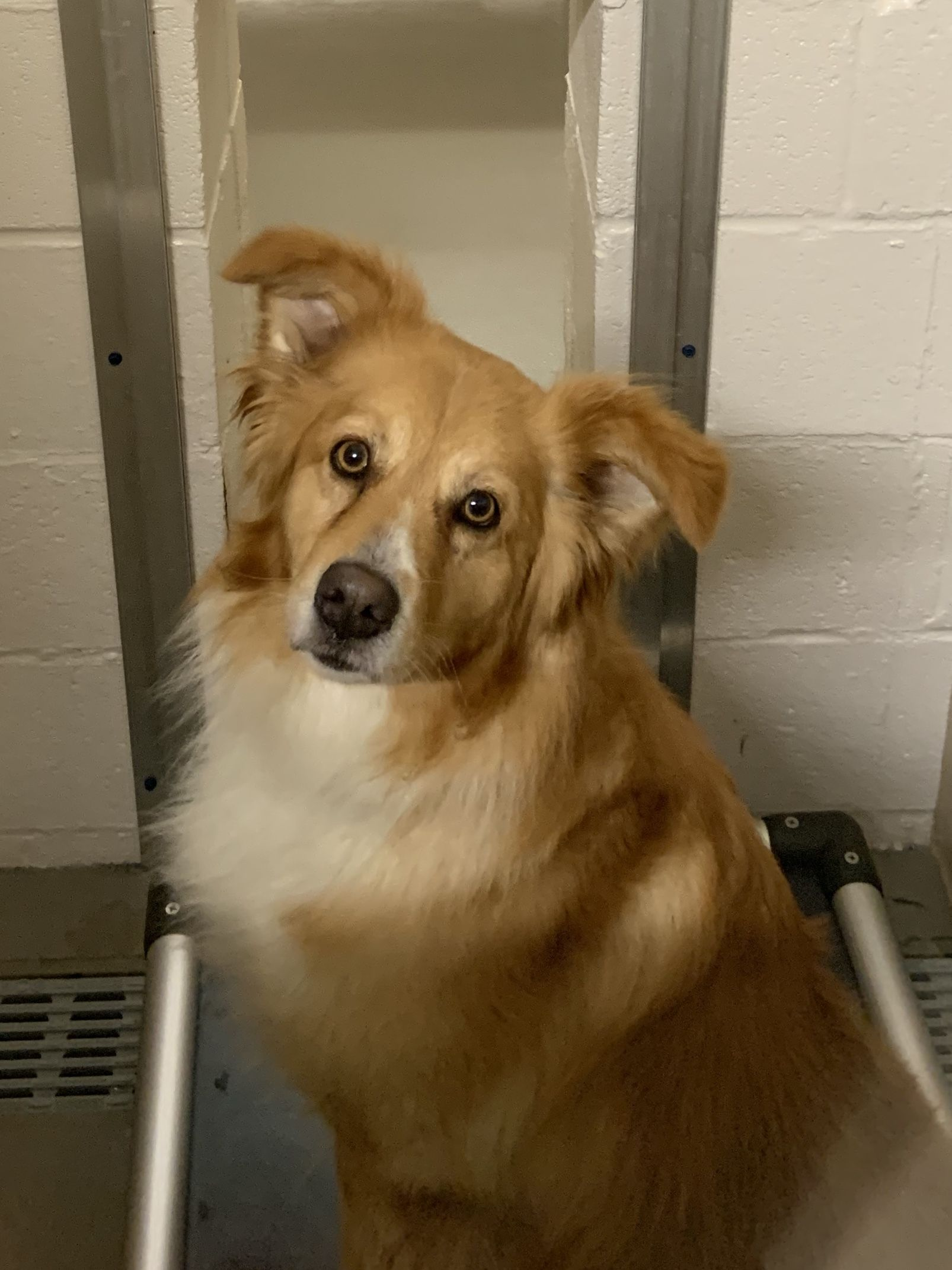Adopt Hank A24/Adopted on Petfinder Pet adoption