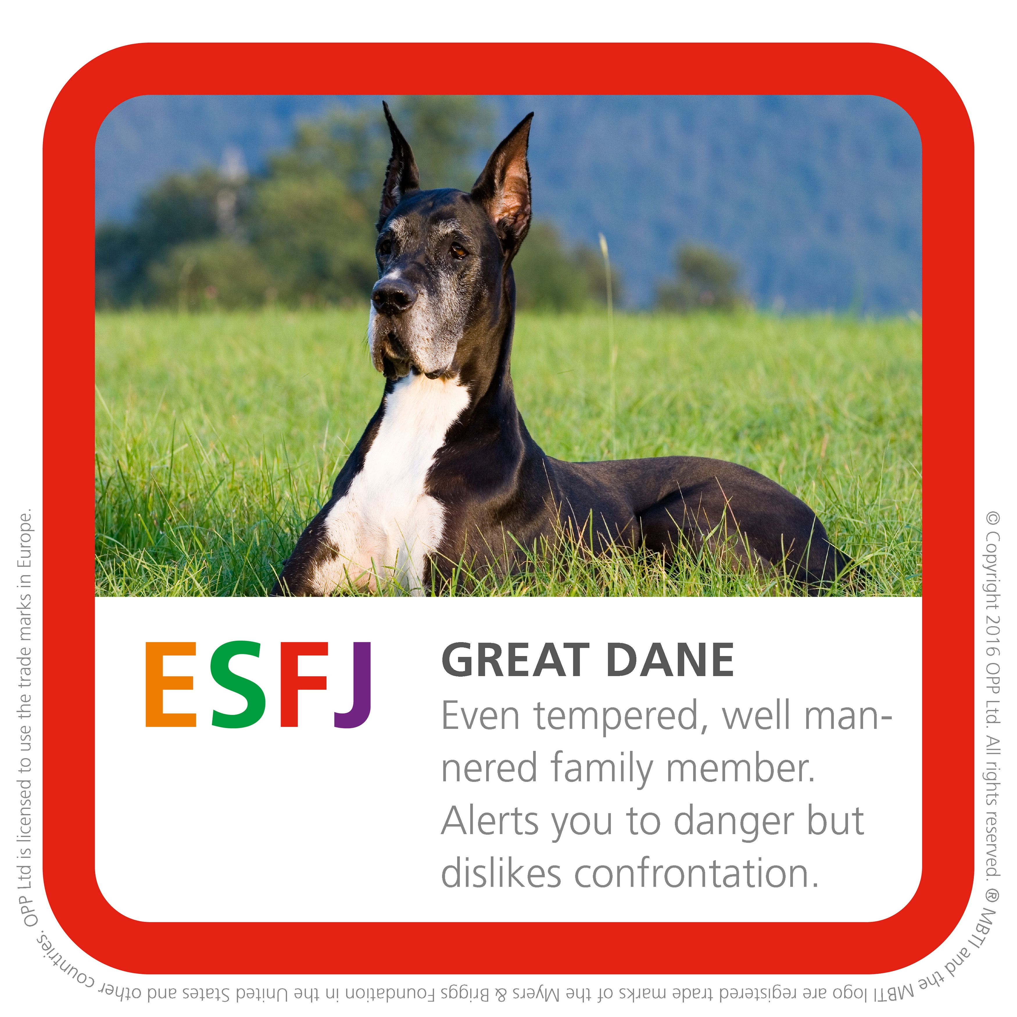 Esfj Great Dane Esfj Types Of Dogs What Kind Of Dog