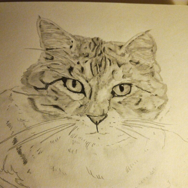 Working on a new cat #art #artist #animal #fineart  #chat #cats #pencil #drawing