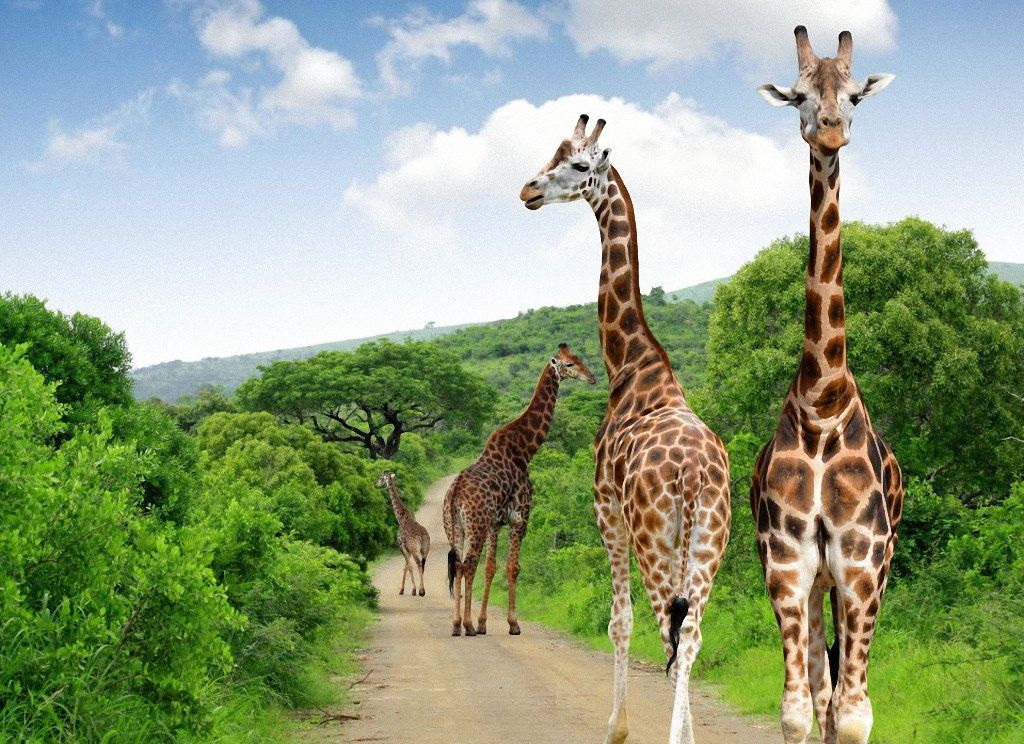 CNN made a rating of top 30 most beautiful national parks in the world.  Kruger National Park, South Africa