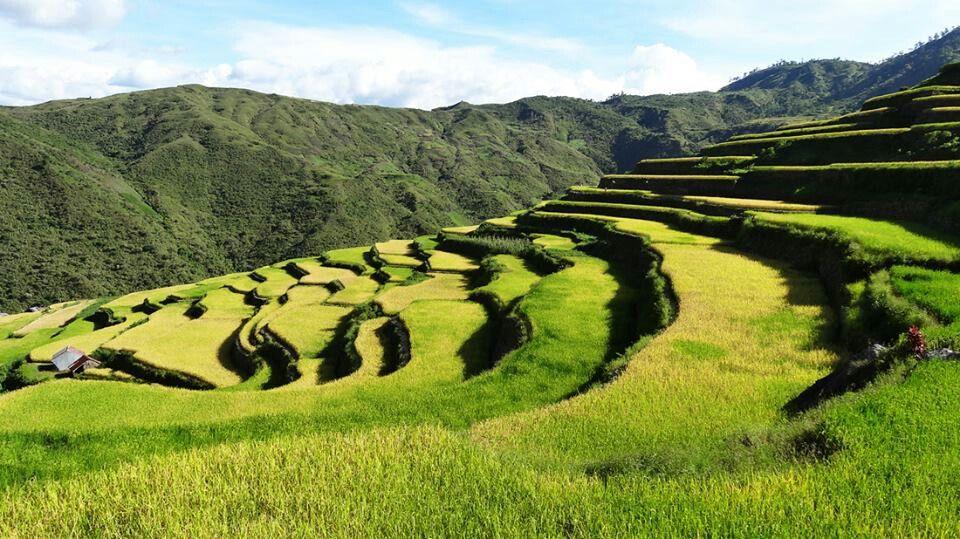 Buskalan rice terraces Rice terraces, Philippines, Farmland