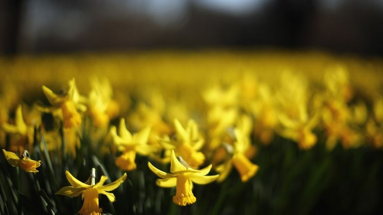 5 Classic Novels To Read In Spring is part of Yellow daffodils, Daffodils, Spring pictures, Spring, Classic novels to read, Pop up london - Where I live in the Great White North, we are finally—finally—beginning to see the signs of spring  Not actual spring of course—we got a whole new layer of fresh snow today—but the barest hints that the season might be on its way; flickerings that…