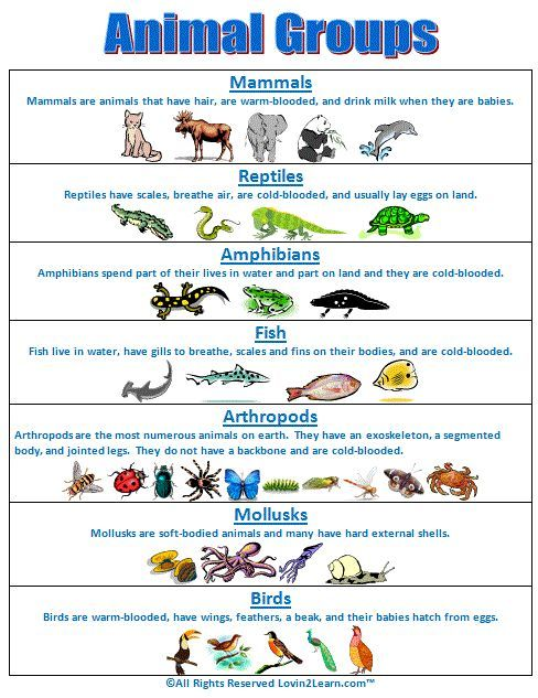 25 best ideas about classifying animals on pinterest activities pinterest worksheets. Black Bedroom Furniture Sets. Home Design Ideas