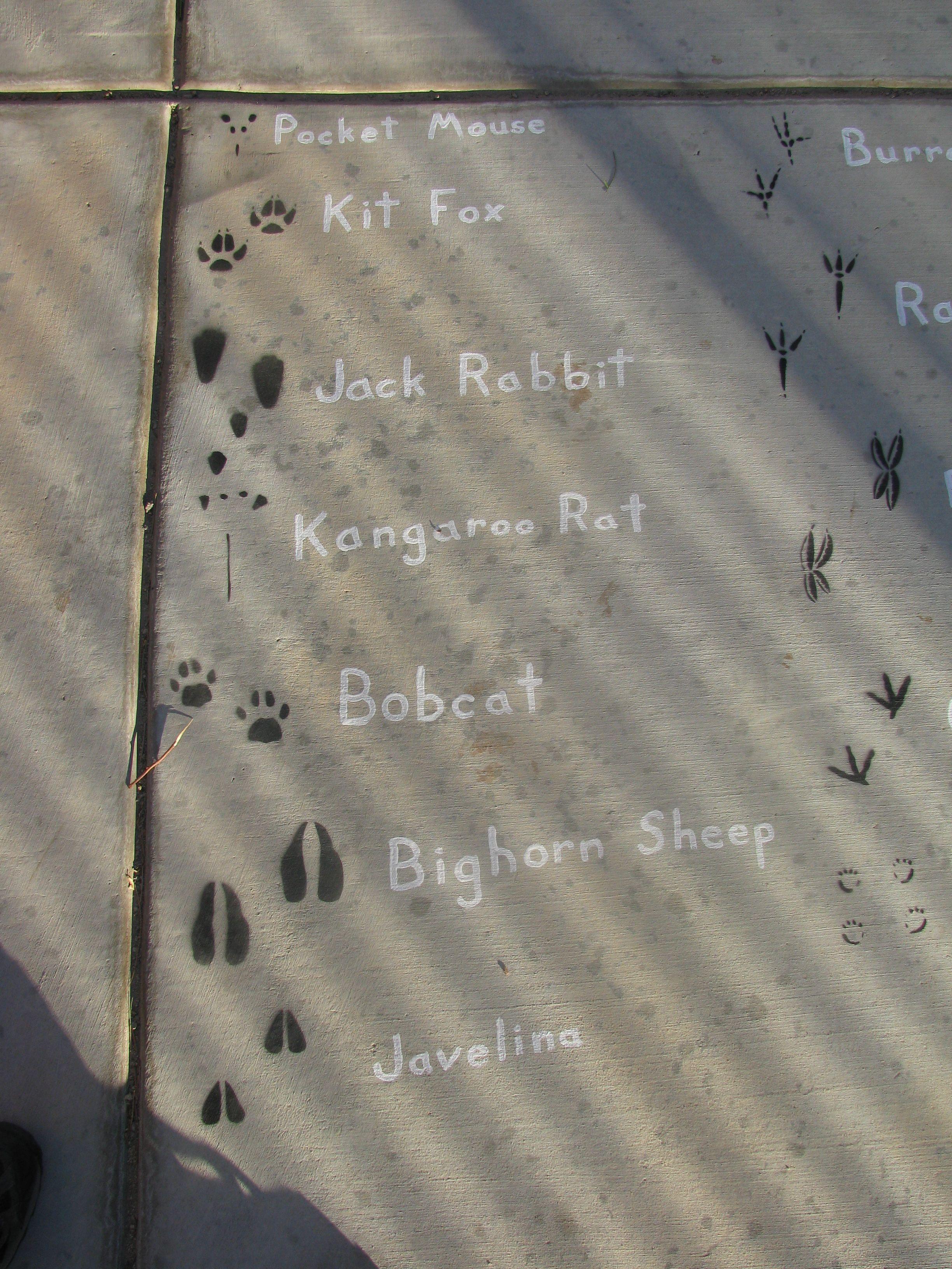 Desert Animals Foot Prints