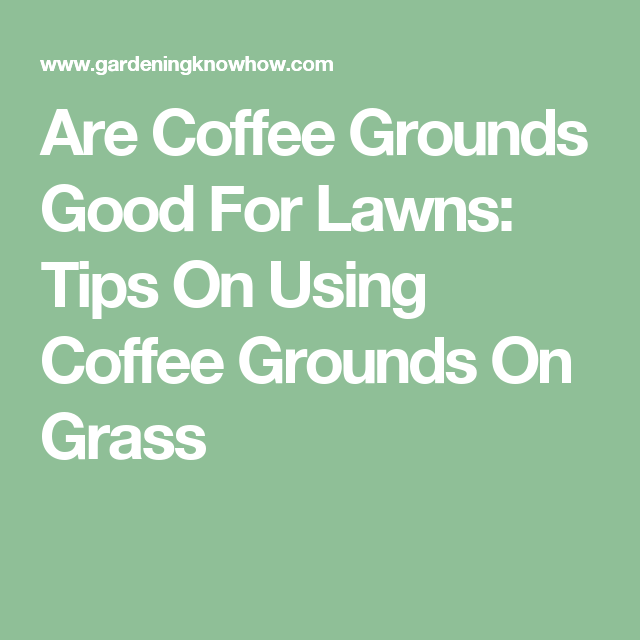 Are Coffee Grounds Good For Lawns Tips On Using Gr