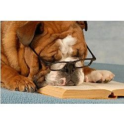 Read To A Dog At West Bloomfield Township Public Library With Images Pets Smart Dog Dogs