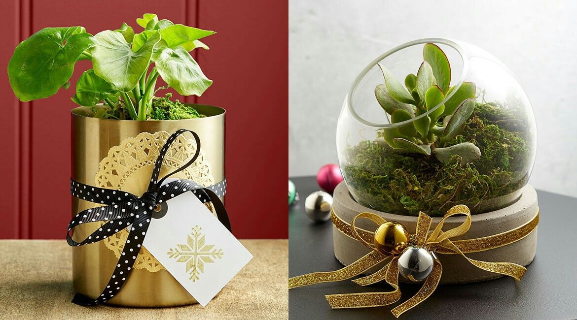 pots of festive joy. kmart styling Xmas crafts, Garden