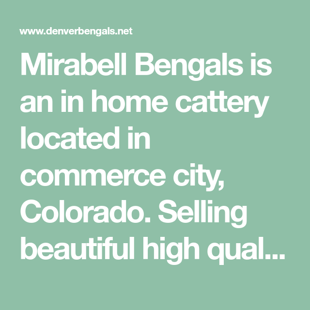 Mirabell Bengals Is An In Home Cattery Located In Commerce City Colorado Selling Beautiful High Quality Bengals For Che Commerce City Cattery Kitten For Sale