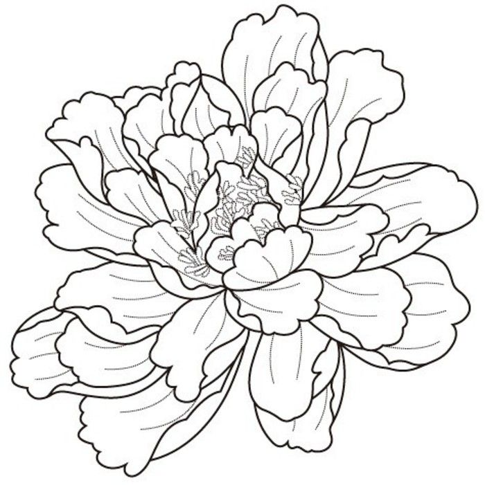 Peony Flower Line Drawing : 牡丹花画法。 花花 pinterest drawings tattoo and flowers