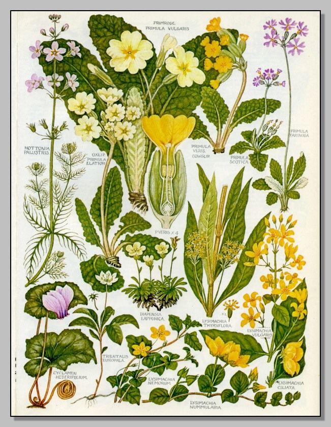 Fiori Gialli Libri.Libri Illustrazioni Di Fiori Illustrazione Botanica E