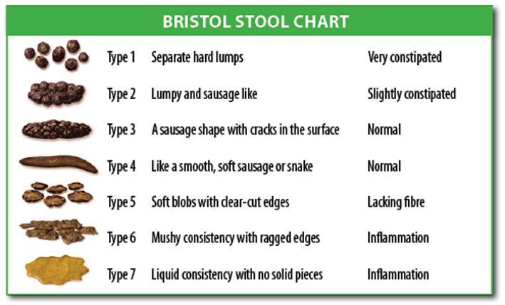 Bristol Stool Chart  Para Nos Sentirmos Sempre Bem