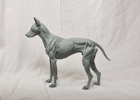 Canine Anatomy Study | Model Kits | Pinterest | Anatomy and Dog anatomy