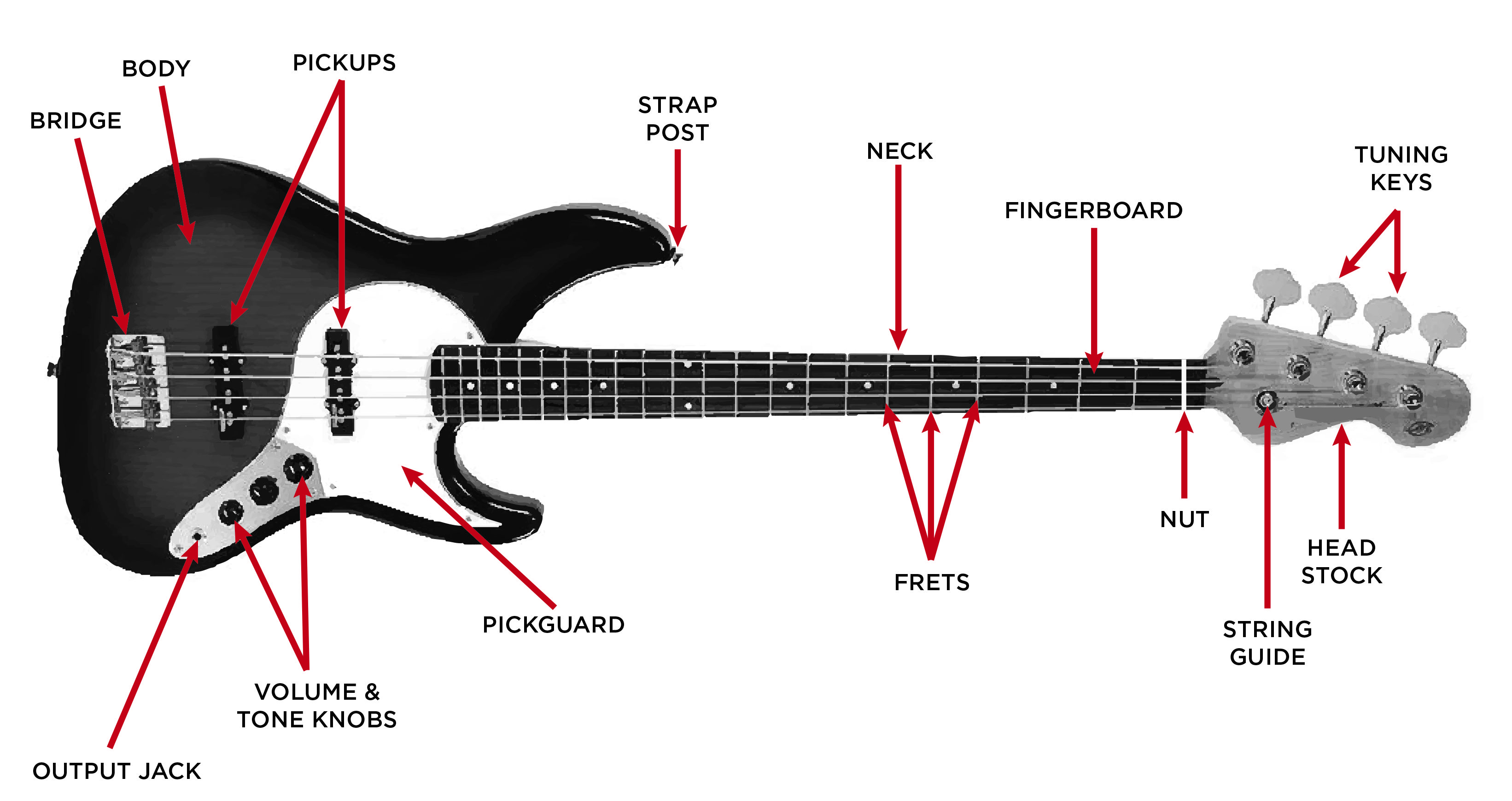 The Anatomy of a Jazz Bass | THE BASS | Pinterest | Bass
