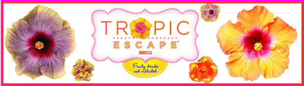 Tropic Escape Hibiscus from Costa Farms -- Review here ...
