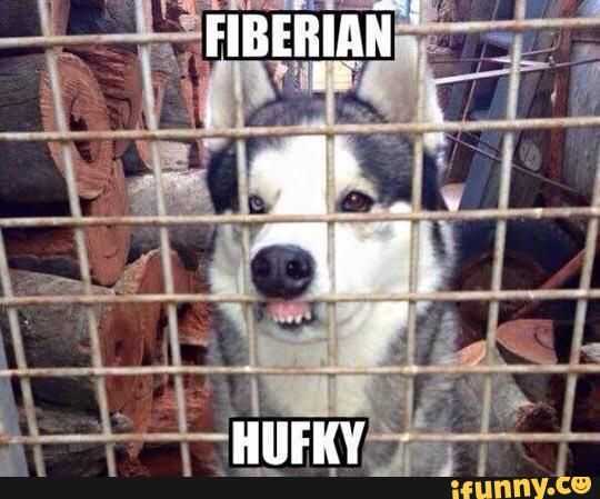 Lol Hufky Lisp Siberian Husky With Images Dog Quotes Funny