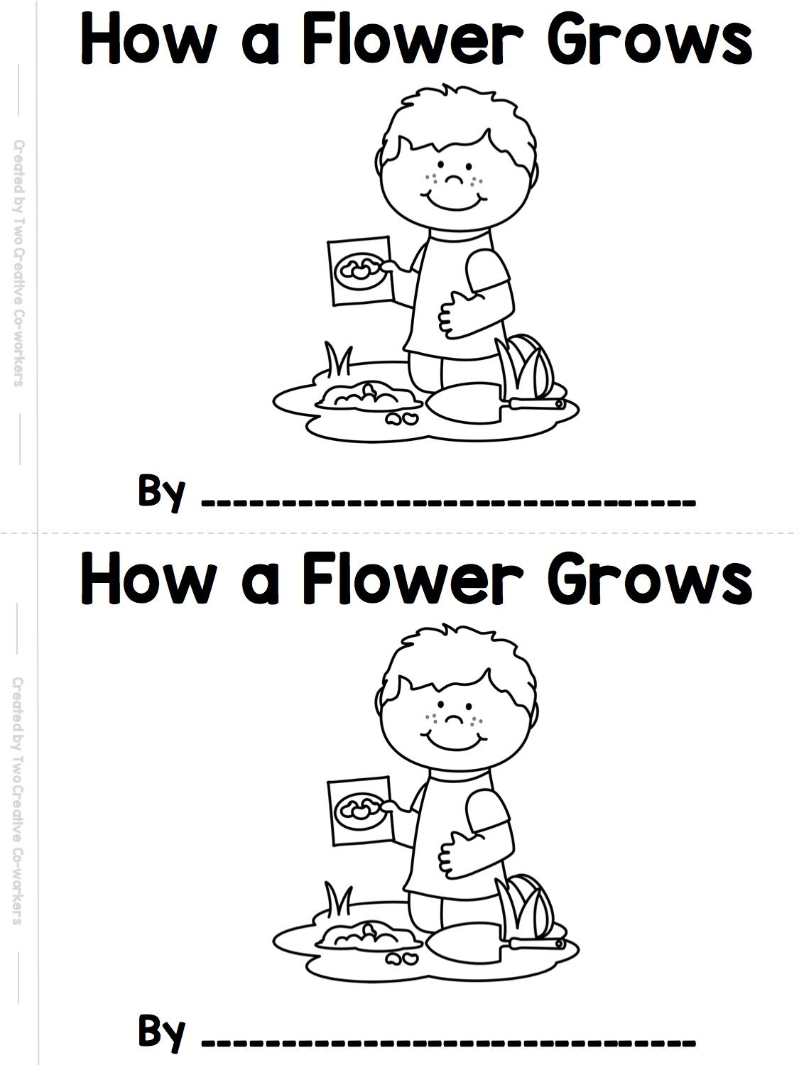 The Life Cycle Of A Flower Printable Mini Book