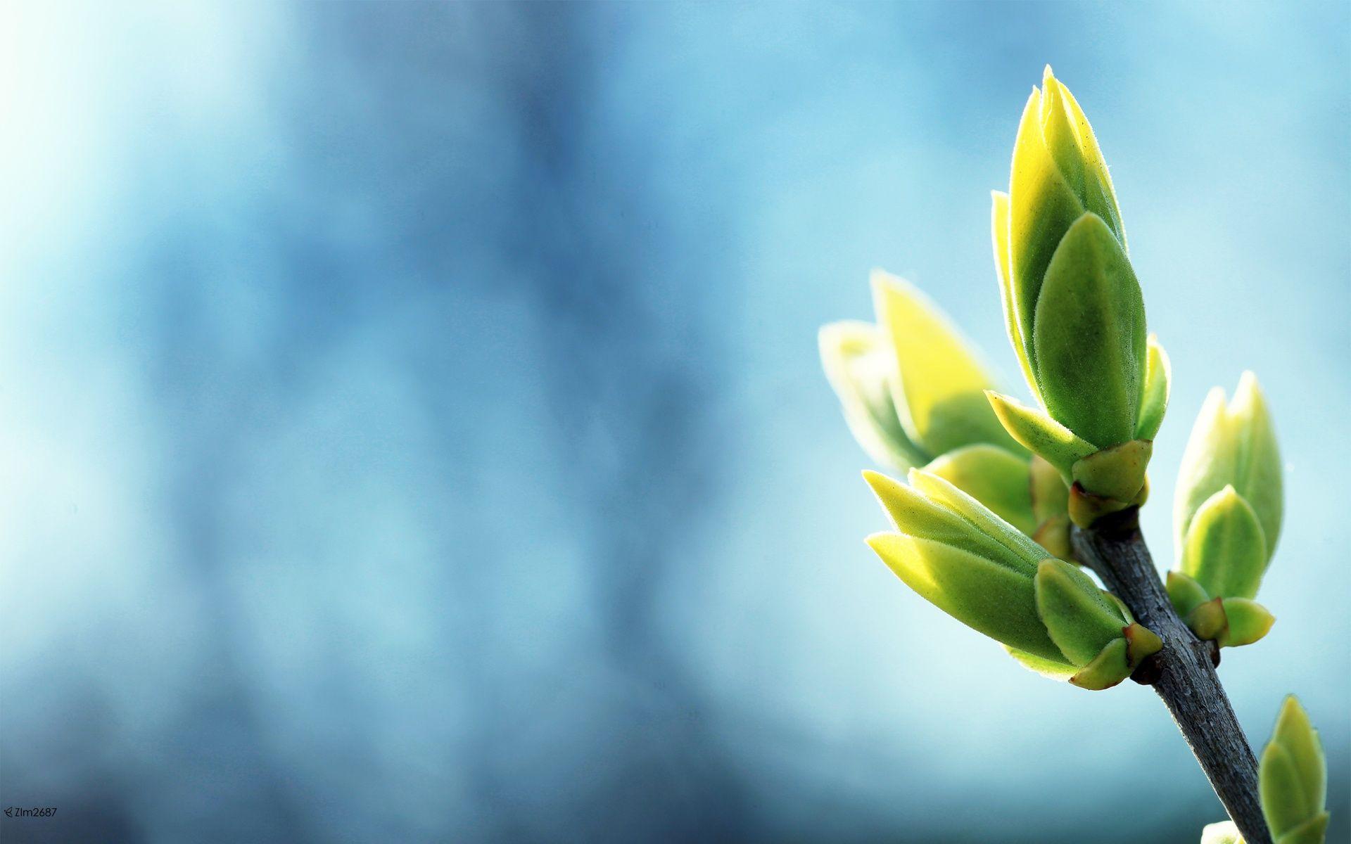 Spring-green. Il dolore genera crepe nell'anima, ma è da quelle che germogliano i fiori. Antonio Curnetta