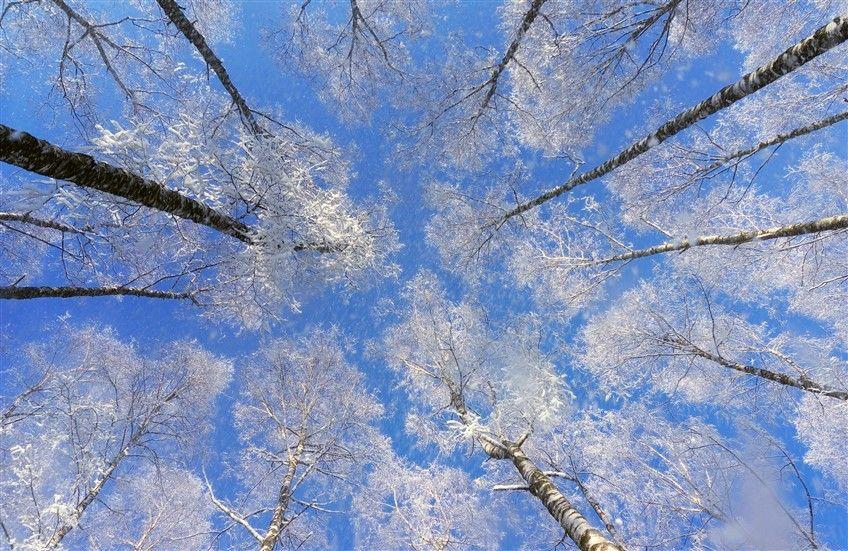 كتالوج الاسقف الفرنسية أشجار وسماء Stretch Ceiling Models سماء شمس غيوم احدث ديكورات غرف النوم تصاميم فلل من الد Abstract Artwork Artwork Abstract
