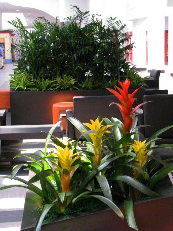 Long Term Plants (43).jpg