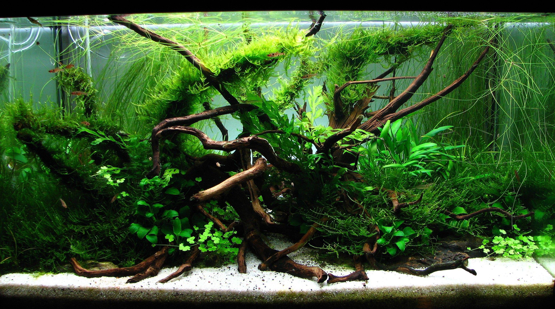 d1303da3deb8175a304aebb69c121c8e Frais De Aquarium Rond Conception