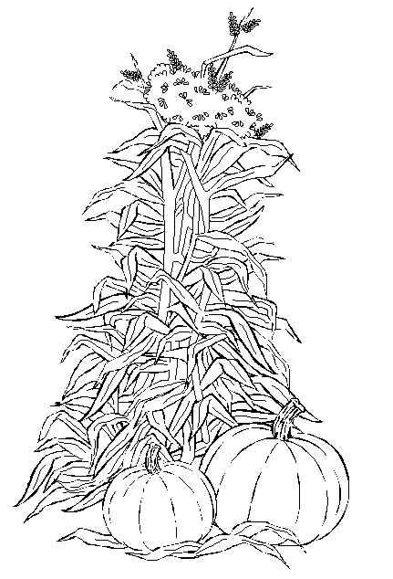 Cornstalk And Pumpkin Harvest Coloring Page For This Autumn And