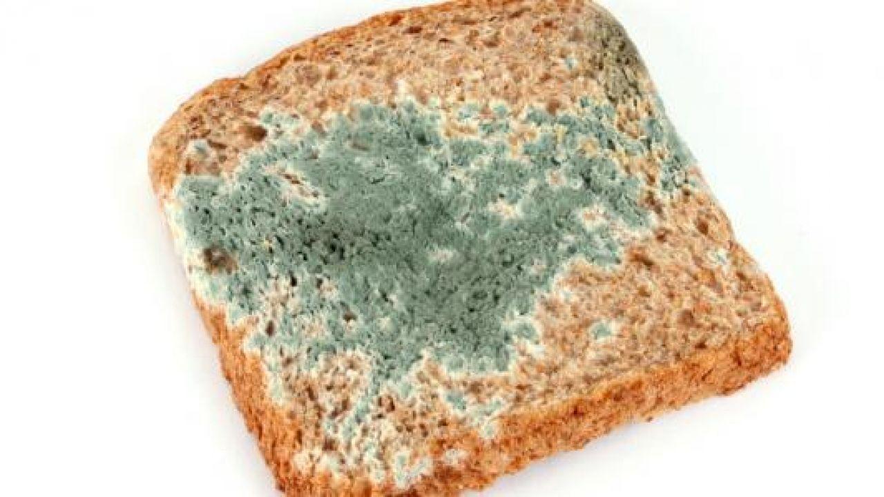 عفن الخبز Bread Mold Food Bread