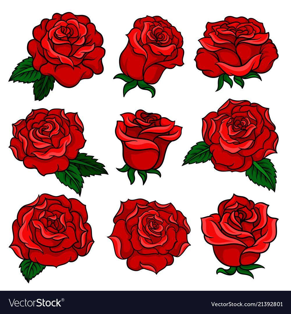 Set of red roses bud of garden vector