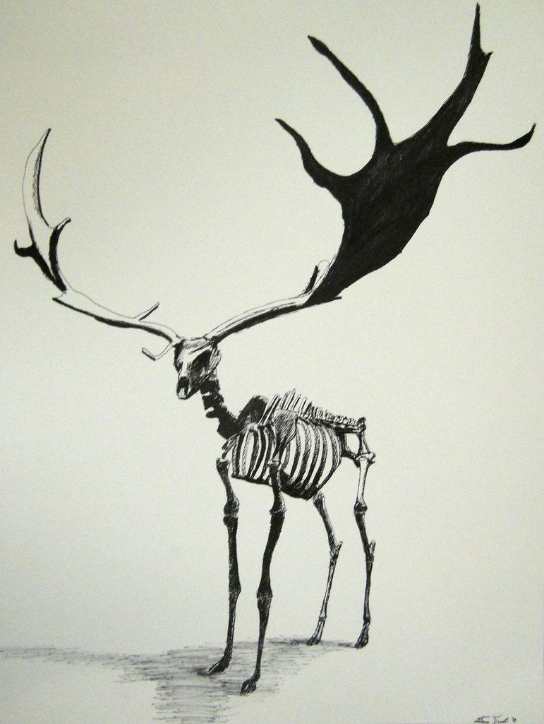 Irish elk skeleton. That\'s a heck of a rack to have to carry around ...