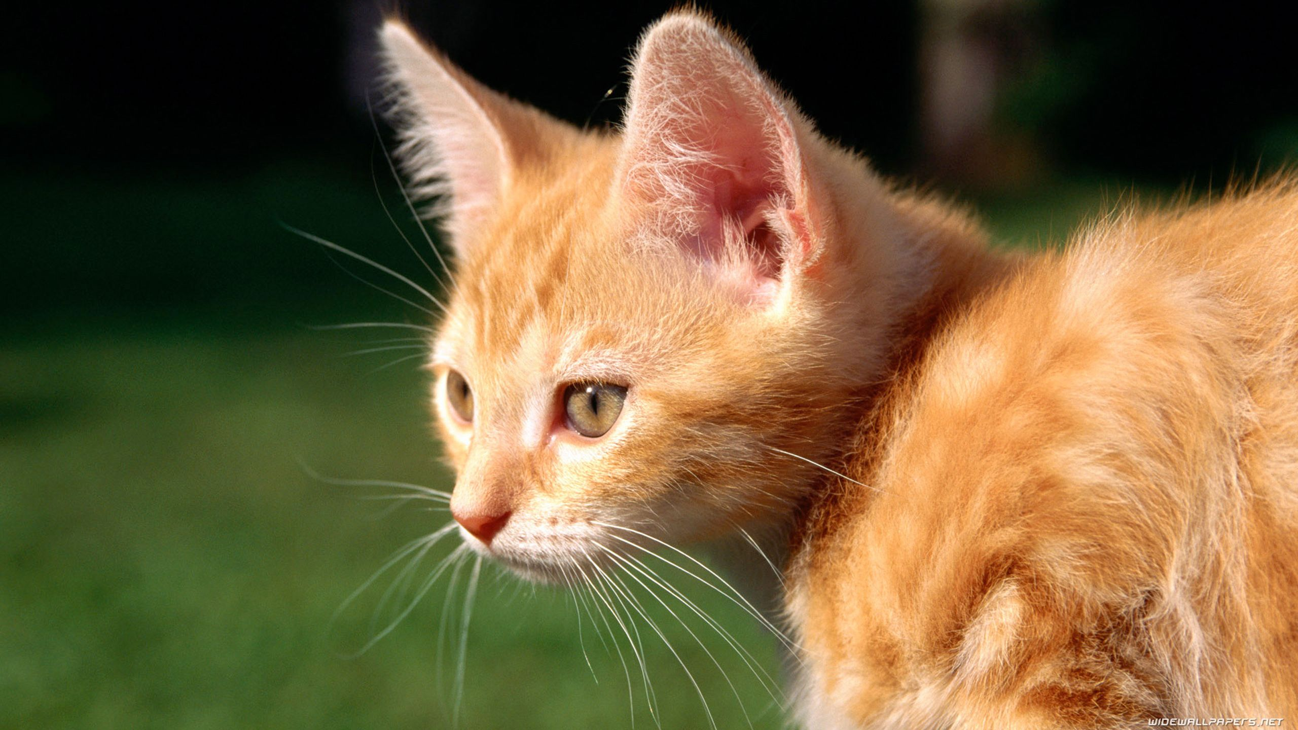 Cute Cat Baby Cats Tabby Kitten Cats