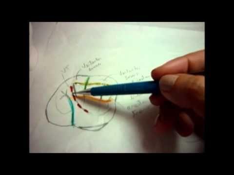 Video 12 1o Molar Superior Face Oclusal Exercícios - YouTube ...