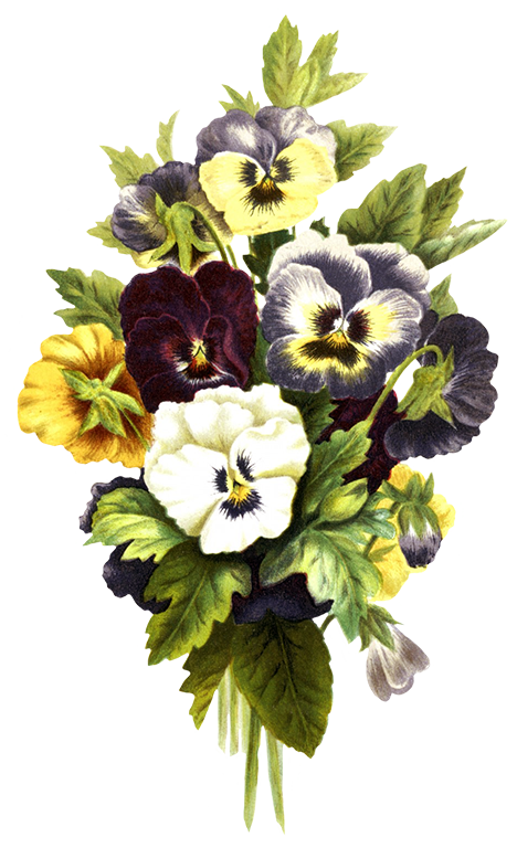 Pin By Spring Studios On Summer At Spring Pansies Flower Clipart Free Flower Clipart