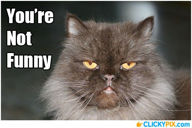 Not Funny Cat Meme : You re not funny serious face meme funny pictures