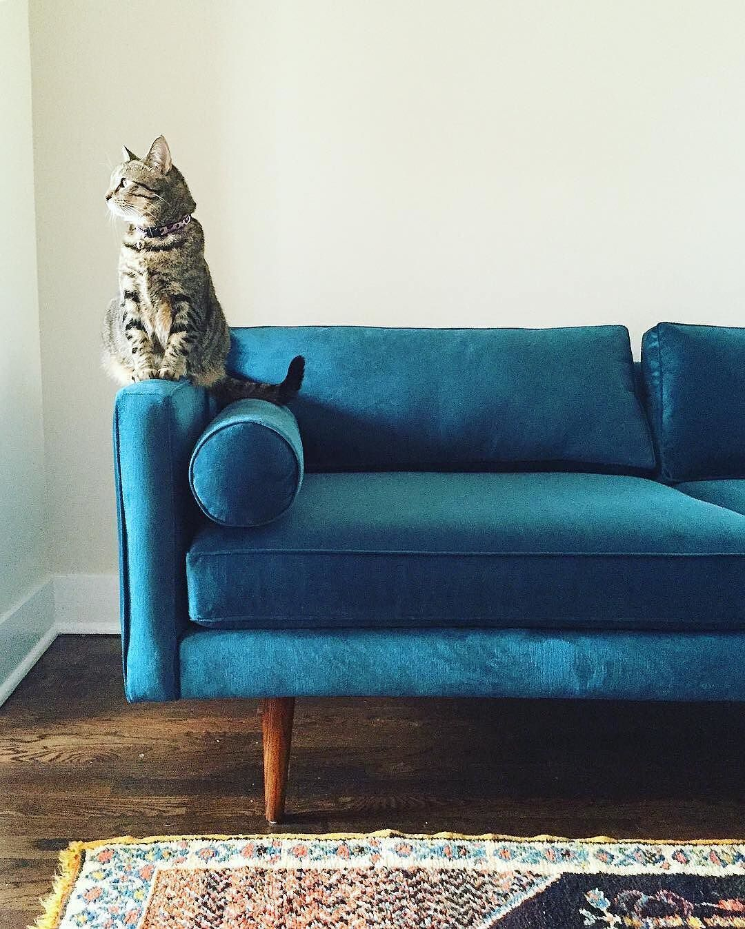 We Love A Pet With Good Taste. 😻💅 #mywestelm Photo By