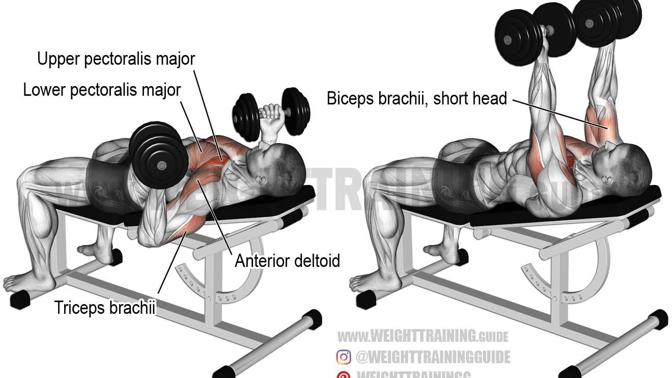 Incline reverse-grip dumbbell bench press exercise ...