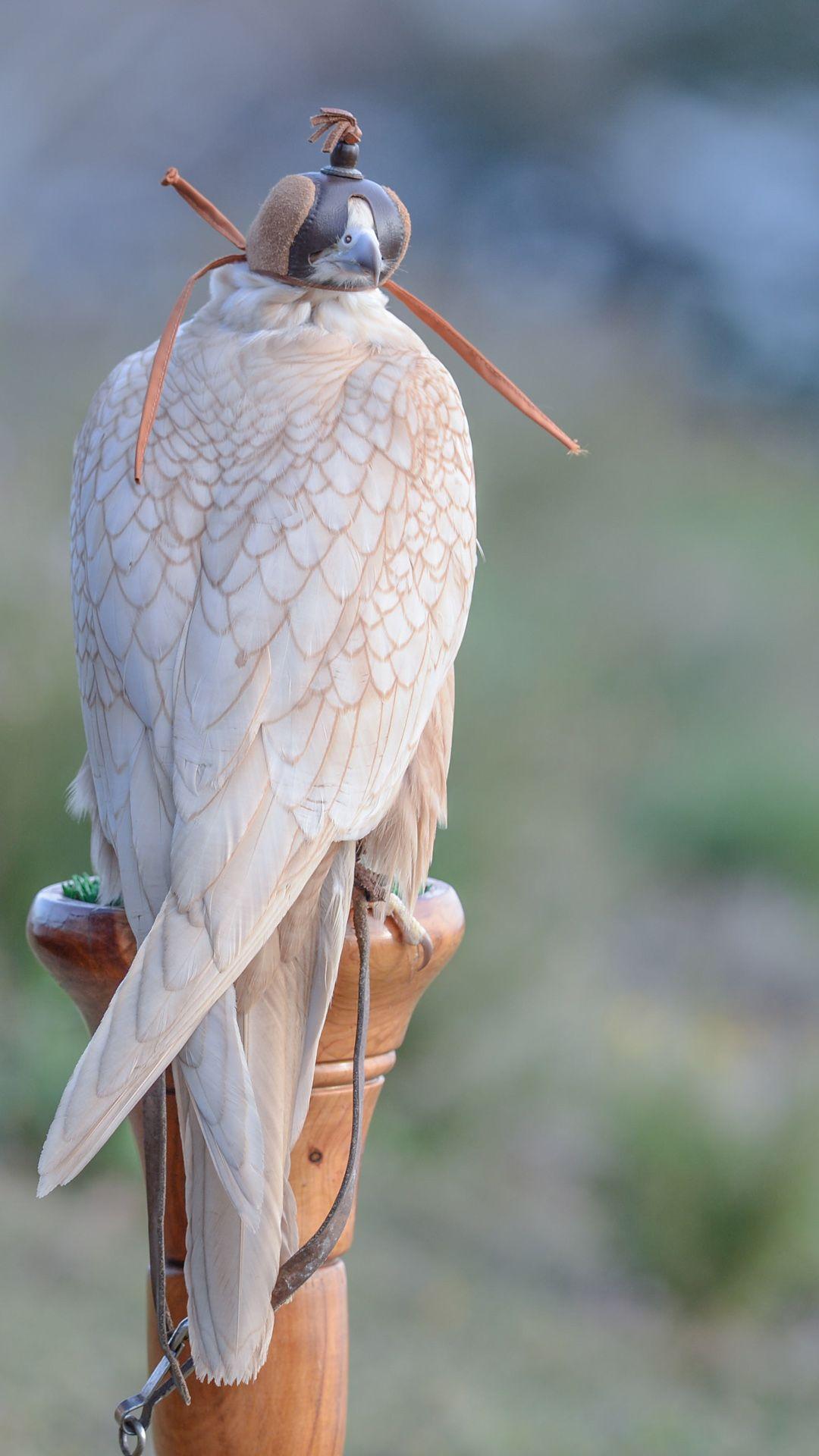 Pin By Akamhi Mohamed On Valkerij In 2020 Rare Birds Birds Of Prey Pet Birds