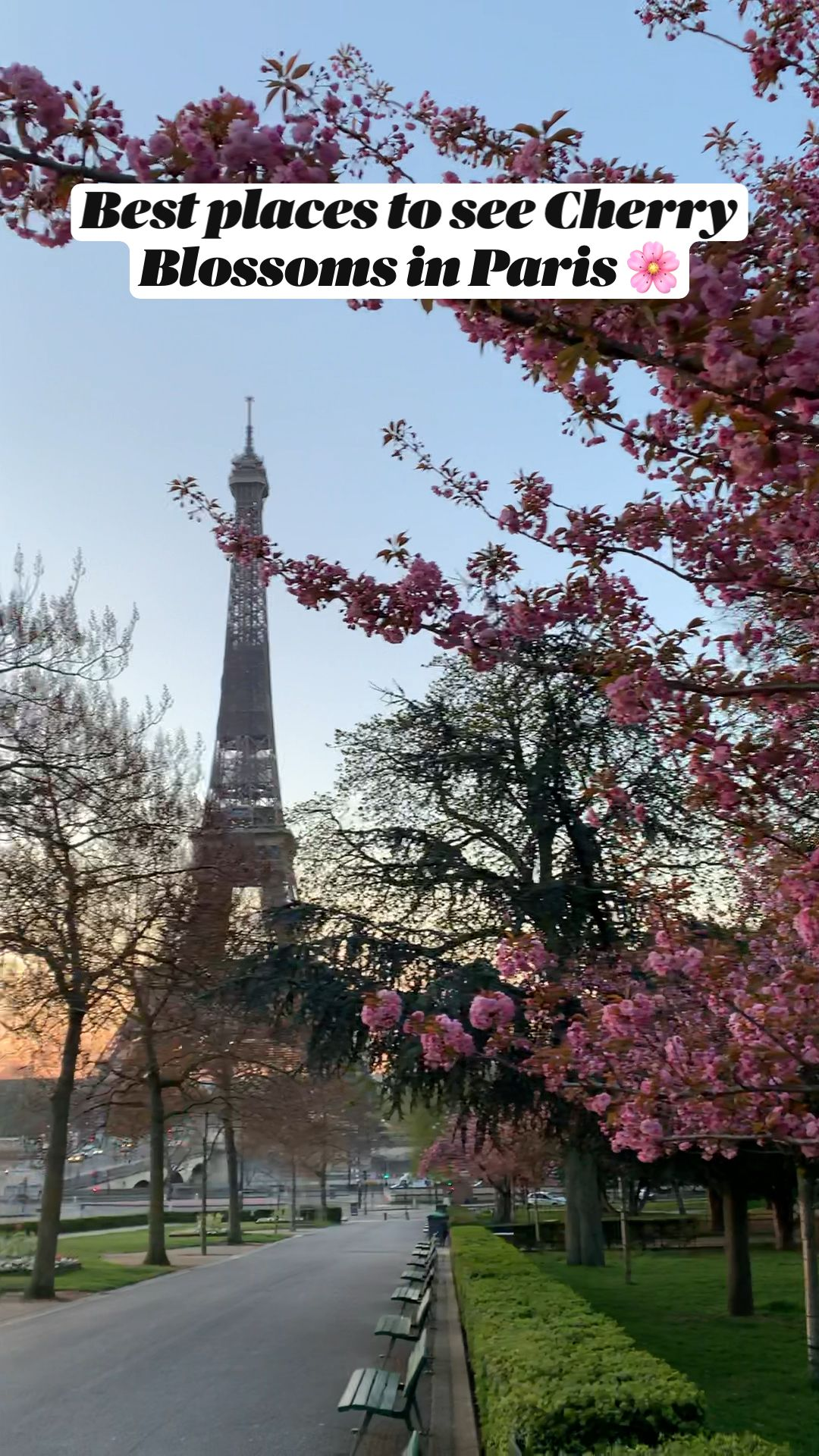Best places to see Cherry Blossoms in Paris 🌸