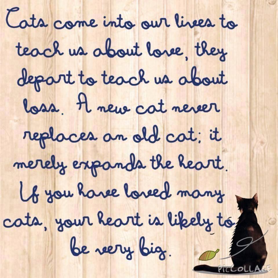 My Cats Left Paw Prints On My Heart Site Heartbreaking Pictures Of Old Cats Cat Quotes Crazy Cats