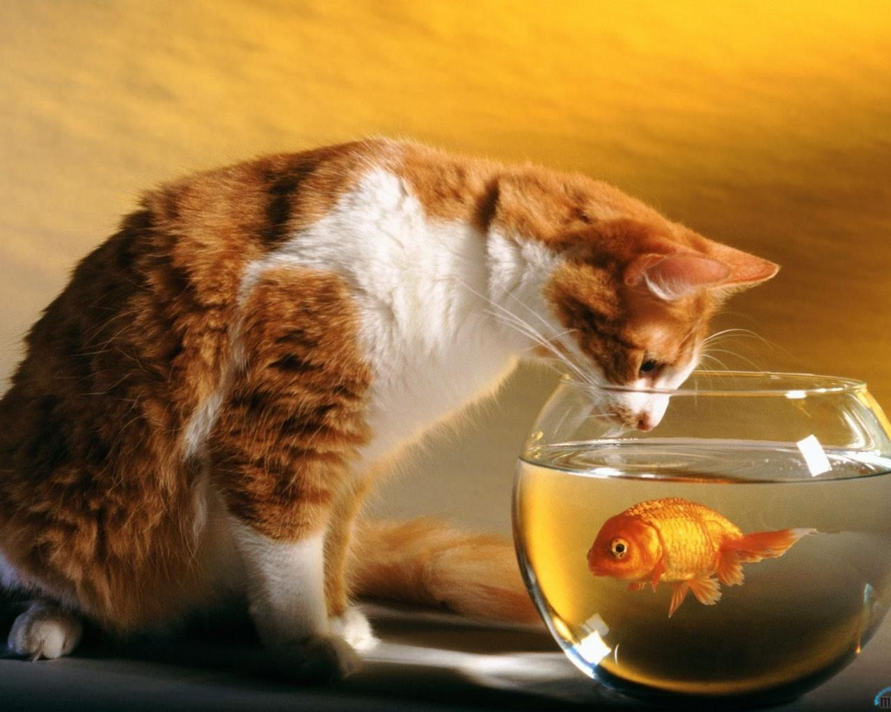 Cat Trying To Eat Fish In The Water Cute Cat Wallpaper Funny Cat Wallpaper Cute Cats