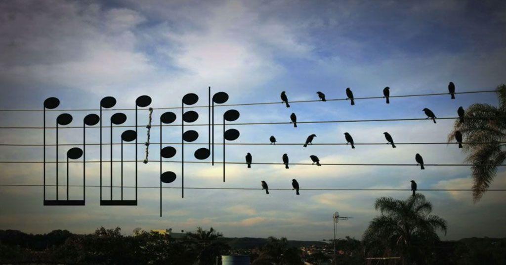 Πουλιά συνθέτουν μουσική μέσω μιας φωτογραφίας.