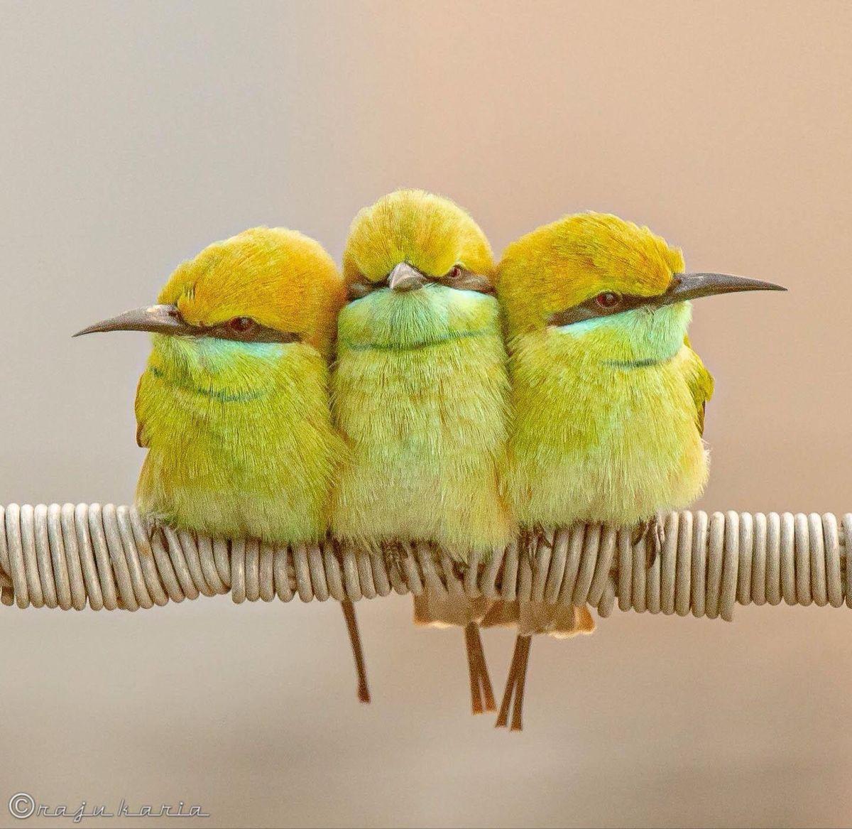 Pin By Kurdistan On Nature Bird Pictures Bee Eater Bird