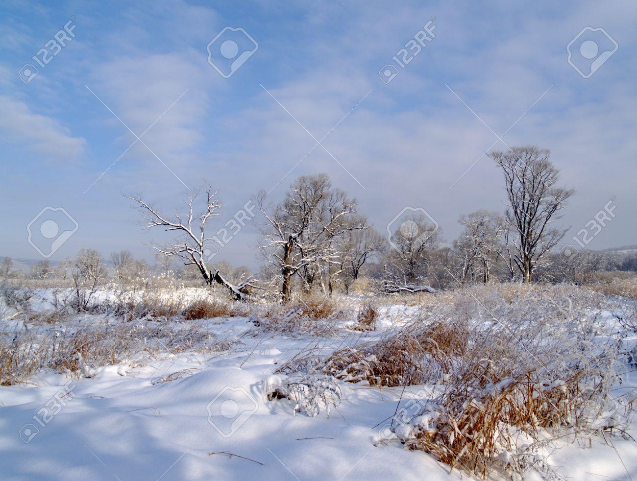 Paysage d 39 hiver solaire matin apr s une chute de neige - 123rf image gratuite ...