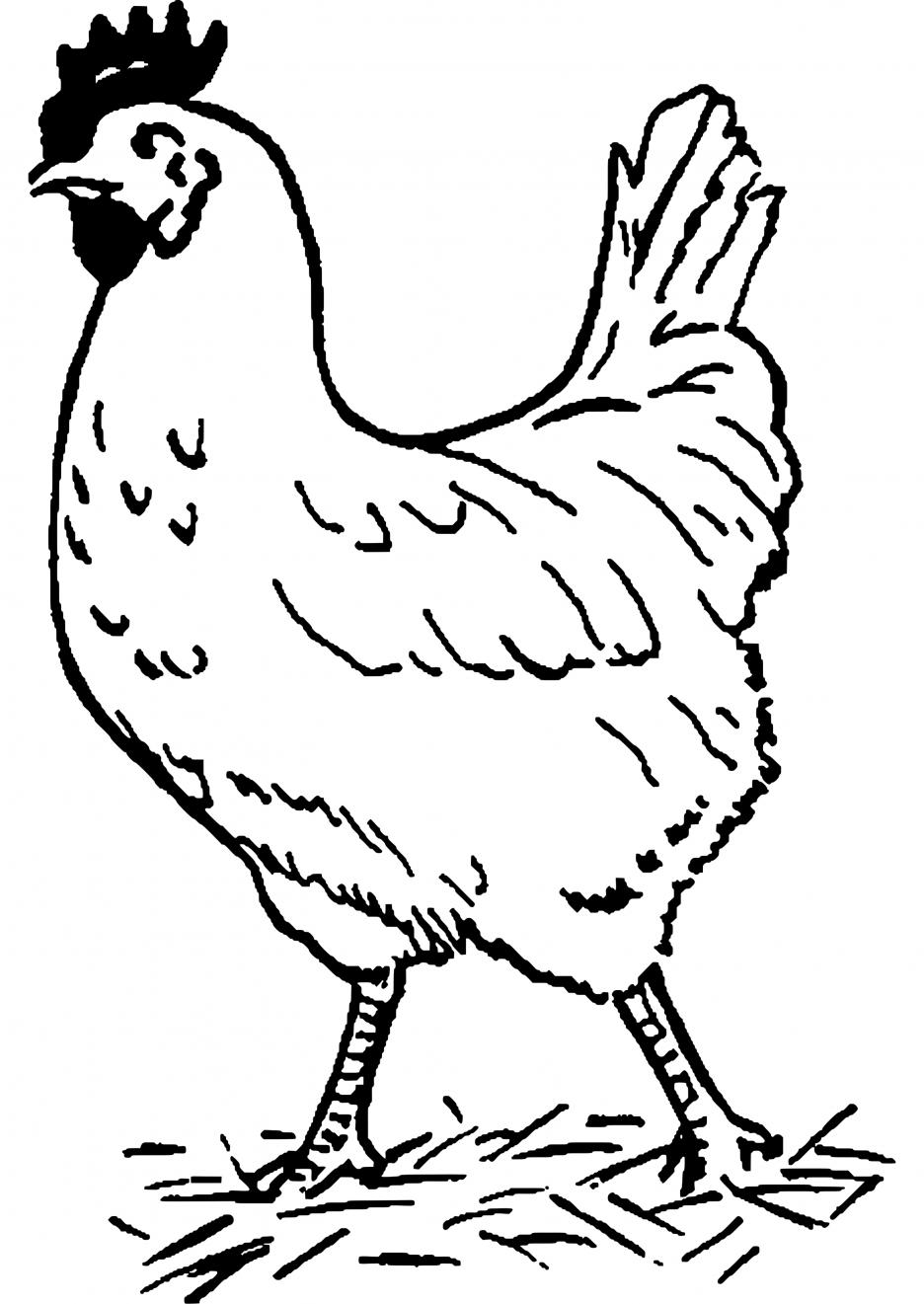 Animaux dessins colorier coloriage poule imprimer est une activite tres importante super - Poules dessin ...