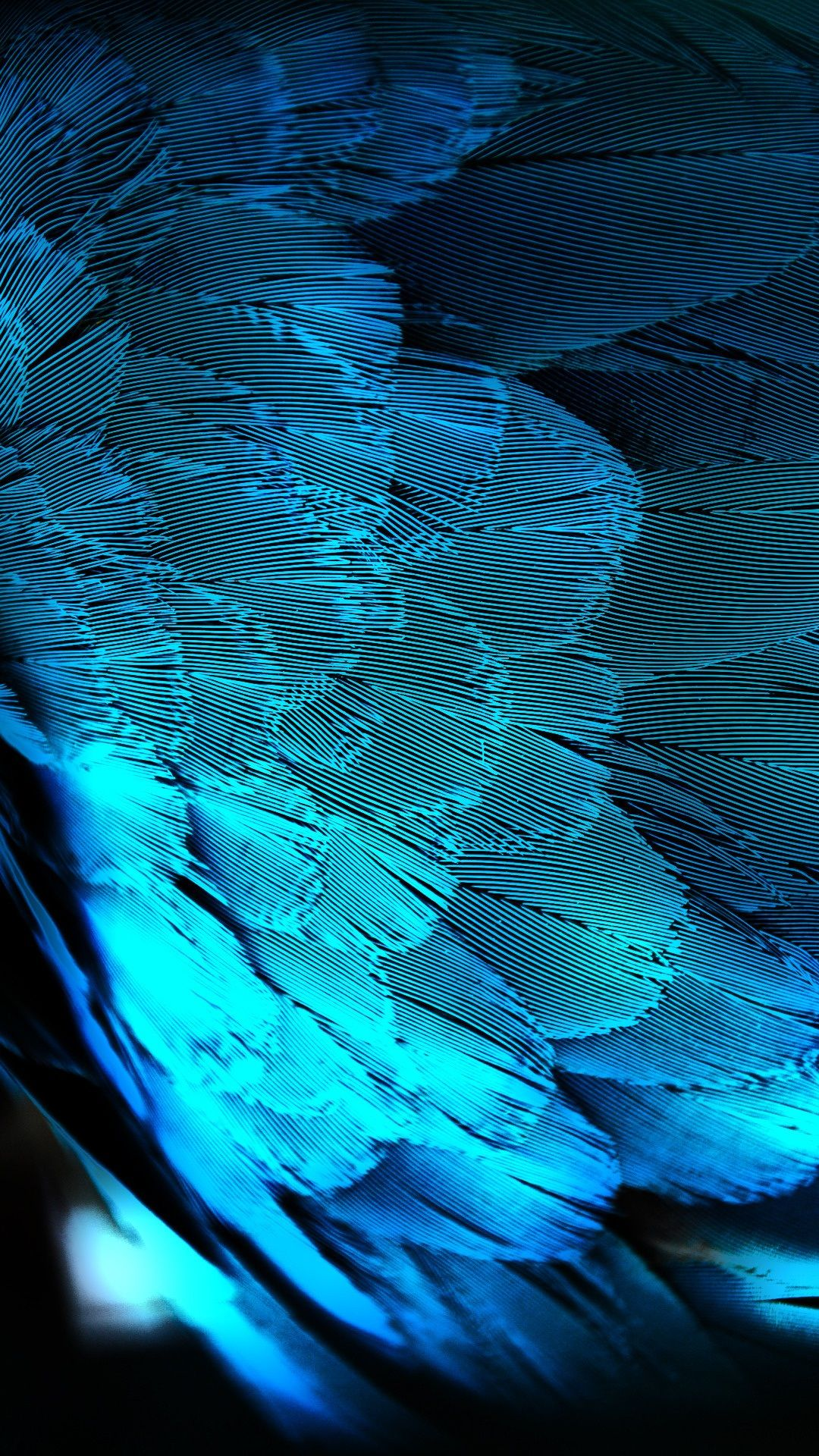 blue hd peacock feathers android wallpaper free download