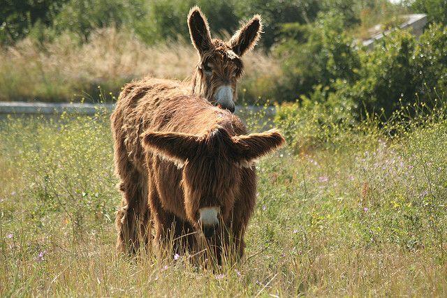 les ânes 012   Flickr : partage de photos !