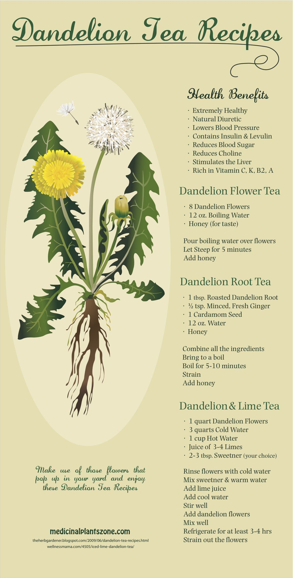 Dandelion Tea Recipes Medicinal Plants Herbalism Dandelion Root Tea