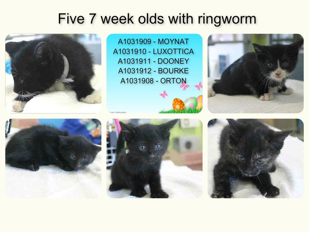 Urgent Nyc Ac C Nyc Brooklyn Center Please Help Save These