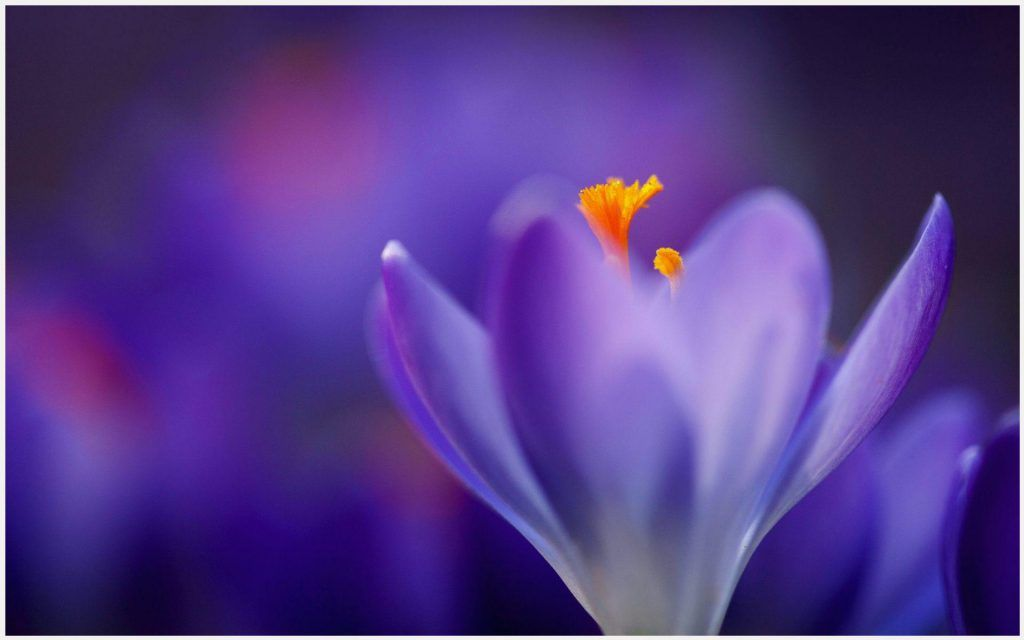 Purple Flower Background Wallpaper