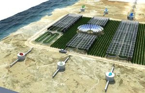 ocean algae combined energy food plan